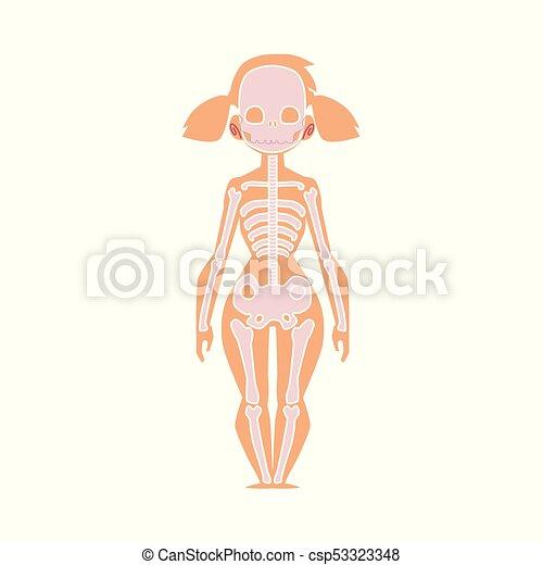 Cuerpo, esqueleto, hembra, gráfico, anatomía, humano. Cuerpo ...