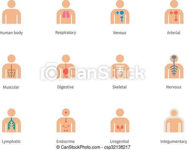 Cuerpo, iconos, color, anatomía, fondo., humano, blanco. Arterial ...