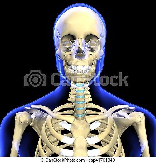 Cuerpo, ilulstration, esqueleto, humano, 3d. Compuesto, esqueleto ...