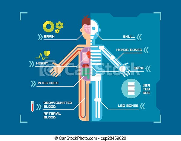 Cuerpo, plano, azul, anatomía, fondo., infographic, diseño, humano ...