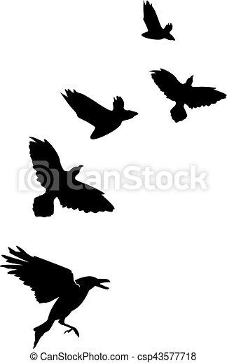 Flock de cuervos cuervos - csp43577718