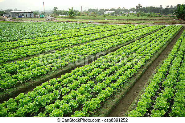 Cultivated land - csp8391252
