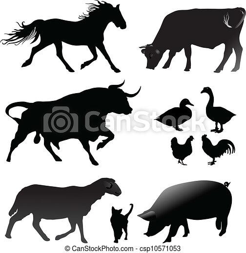 Animales de granja - csp10571053