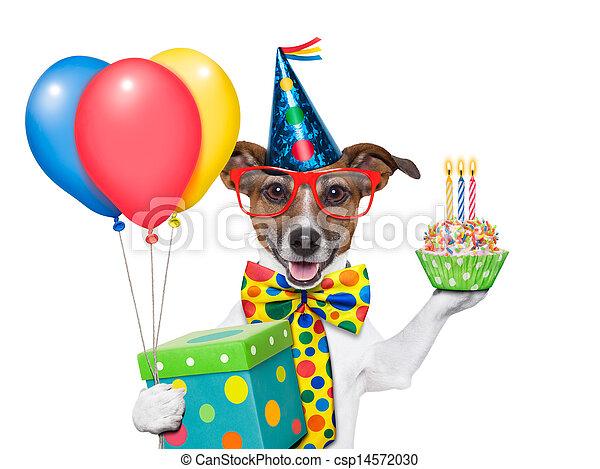cumpleaños, perro - csp14572030