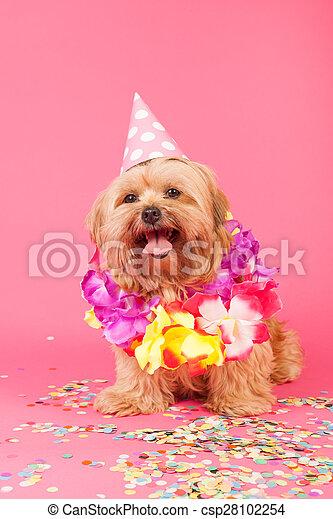 cumpleaños, perro - csp28102254