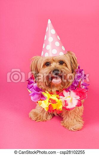 cumpleaños, perro - csp28102255