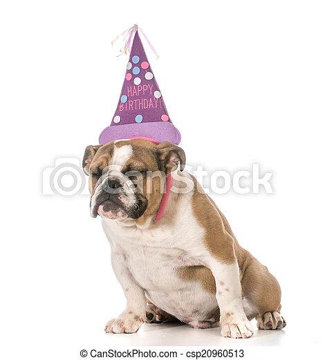 cumpleaños, perro - csp20960513