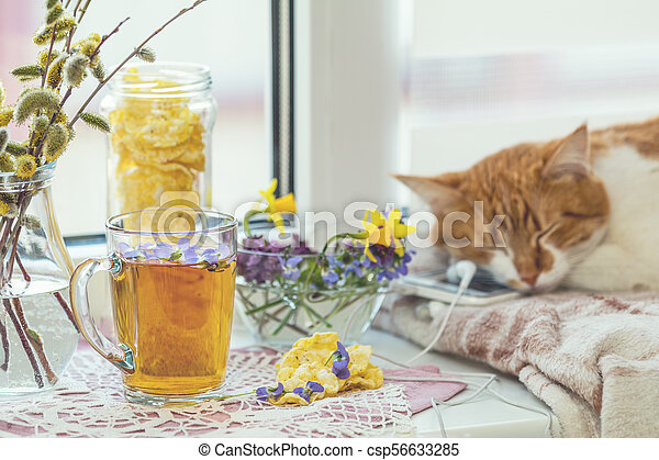 Cup of tea with violet viola, sleeping red-white cat - csp56633285