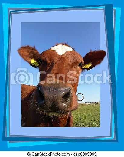 Curious cow - csp0003093