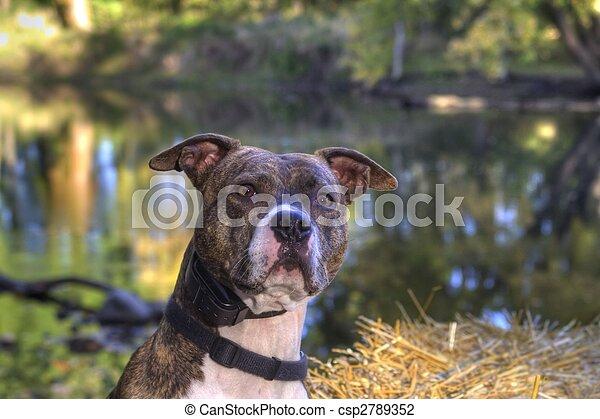 Curious Lookout Dog - csp2789352