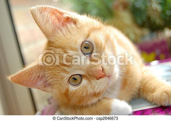 Curious red kitten - csp2846673