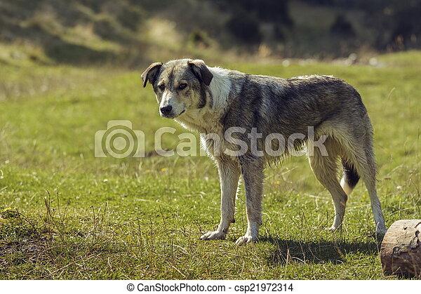 Curious stray dog - csp21972314