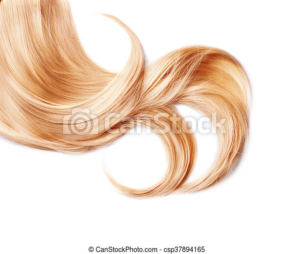 Curl of healthy blond hair isolated on white - csp37894165