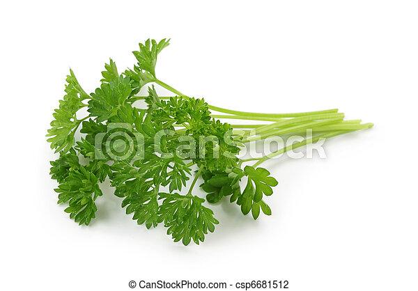 Curly leaf parsley - csp6681512