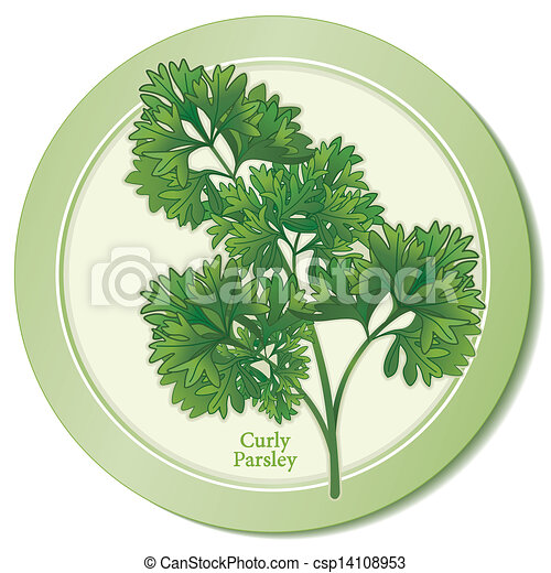Curly Parsley Herb Icon - csp14108953