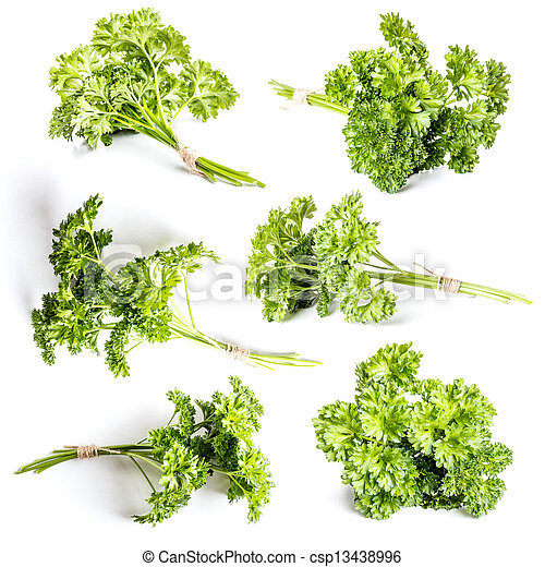 Curly parsley - csp13438996
