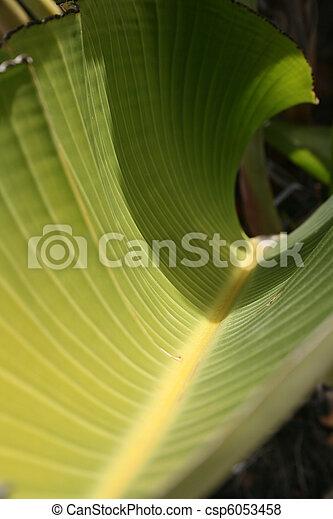 Curved Leaf - csp6053458