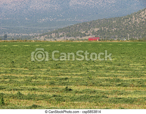 cut hay field - csp5853814