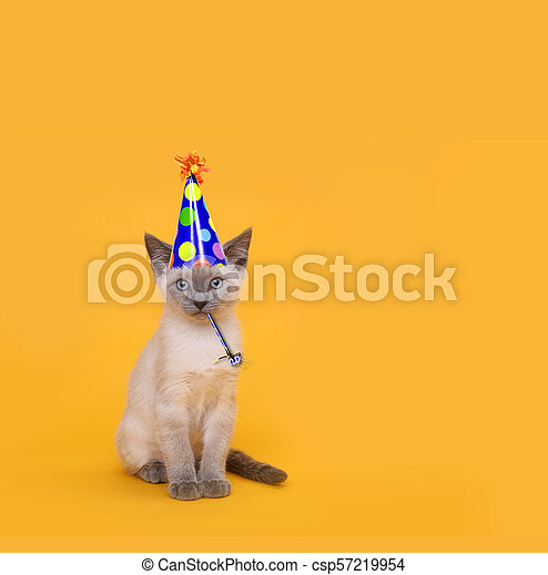 Cut Siamese Party Cat Wearing Birthday Hat