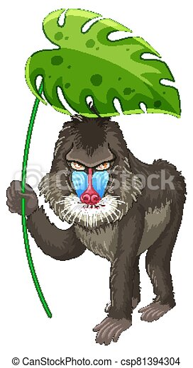 Cute baboon holding green leaf on white background - csp81394304