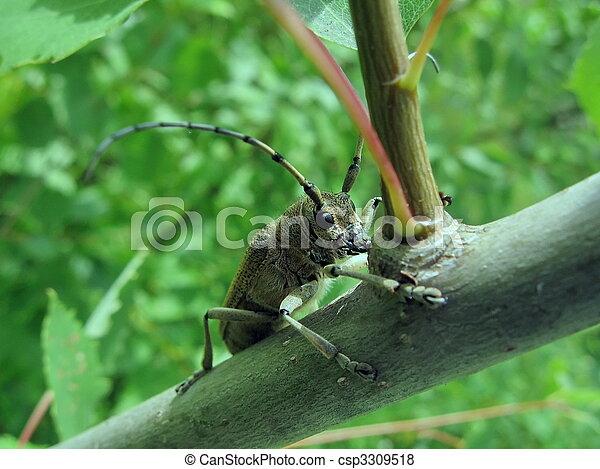 Cute beetle - csp3309518