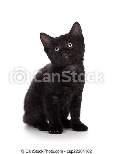 Cute Black Kitten Isolated On A White Background Scary Black Kitten