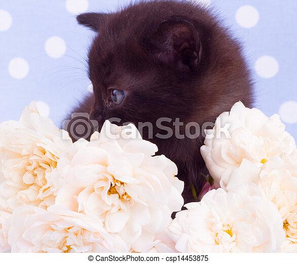 Cute black kitten with rose - csp14453875