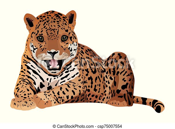 Cute cartoon tiger isolated on a white background. Vector illustration. - csp75007554