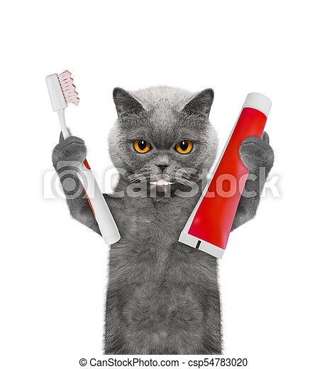 Cute Cat Clean The Teeth With A Toothbrush Isolated On White