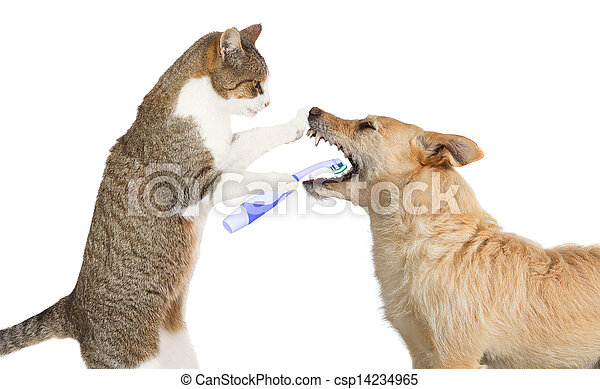 Cute cat cleaning a dogs teeth - csp14234965