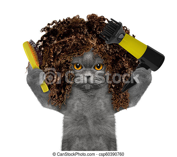 e9551530 Cute cat in spa grooming salon. Isolated on white - csp60390760