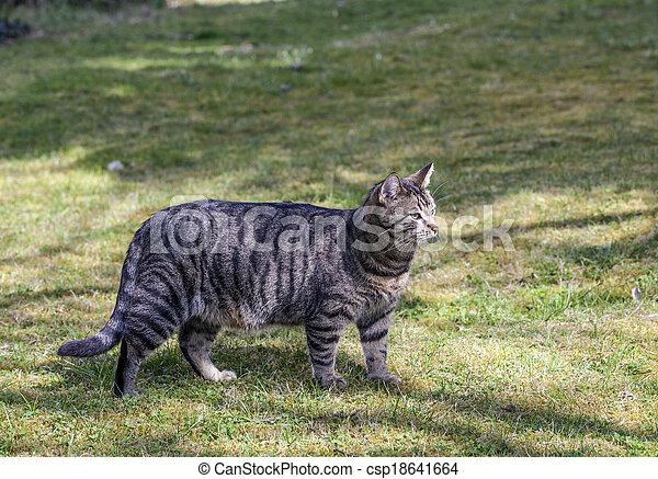 cute cat in the garden - csp18641664