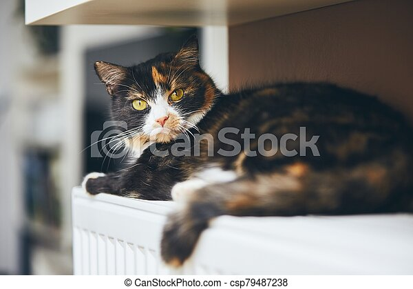 Cute cat is relaxig at home - csp79487238