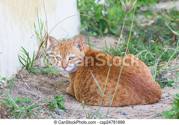 Cute cat sitting on the ground and looking back - csp24781699