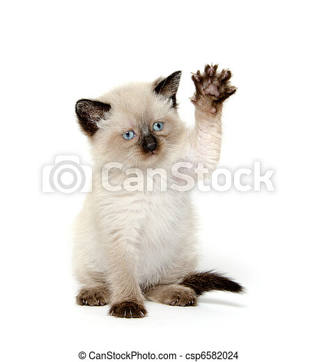 Cute cat with paw up - csp6582024