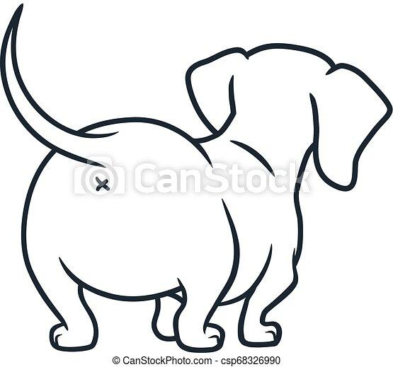 Cream Long Haired Weiner Dog