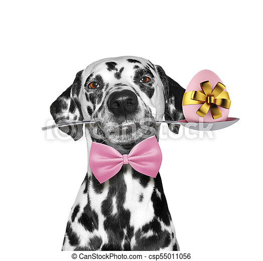 Cute dalmatian dog with spoon and easter egg. Isolated on white - csp55011056