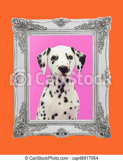 Cute dalmatian puppy portrait facing the camera on a pink background with a silver picture frame and an orange border - csp48917054