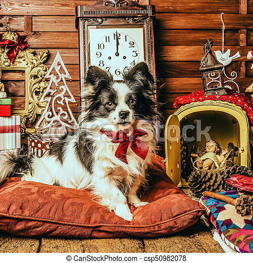 Cute Dog Christmas Presents Portrait Of Little Black And White Dog