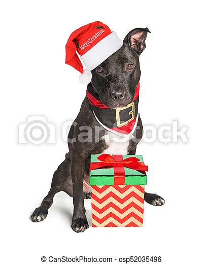 c42f15d31f0d2 Cute dog dressed as christmas santa. Mixed large breed black dog ...