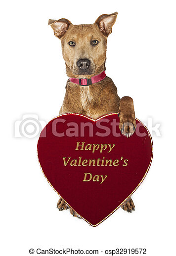 Cute Dog Holding Valentines Day Candy Heart Box Adorable Large