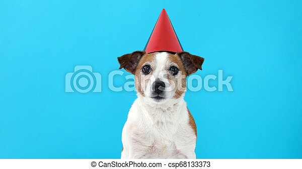 Cute dog in red party hat Designed - csp68133373