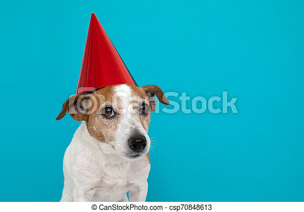 Cute dog in red party hat Designed - csp70848613