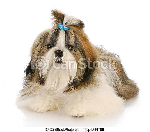 Beautiful Puppies Bow Adorable Dog - cute-dog-stock-image_csp5244786  Picture_551695  .jpg