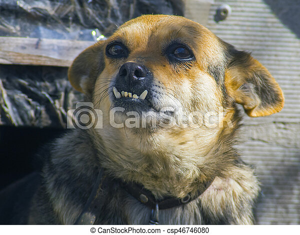 Cute dog with big teeth looking into the distance. Cute domestic dog ...