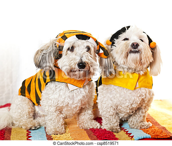 Cute dogs in costumes - csp8519571