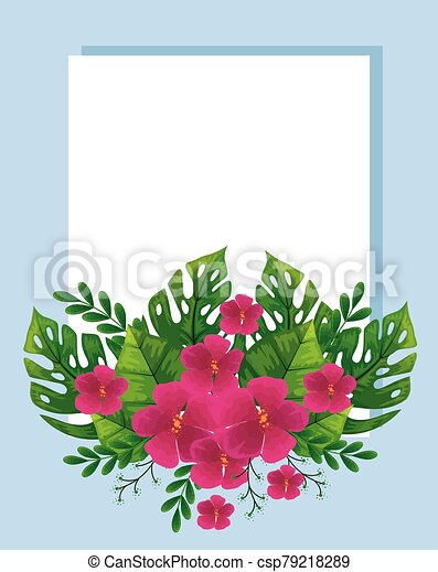 Cute Flowers Fuchsia Color With Tropical Leafs Naturals Vector Illustration Design