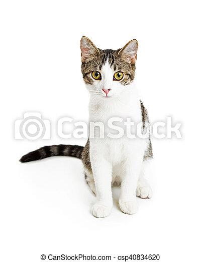 Cute Friendly Kitten Over White - csp40834620
