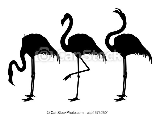Cute Graphic Flamingo In The Side View Pretty Exotic Birds Isolated