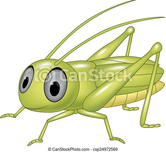 Cute grasshopper posing isolated  - csp34972569